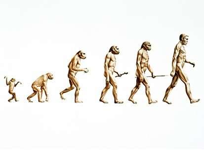 evolutiond.jpg